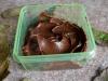 czekoladowy-pudding-z-awokado-10
