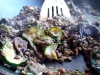 soczewica-z-grzybami-i-cukinia-06